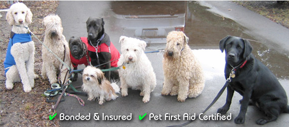 We're Bonded & Insured... and Pet First Aid Certified!